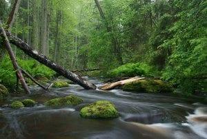 Kako fotografirati naravo in fotografija potoka v gozdu