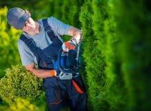 vrtnar obrezovanje cipres žive meje