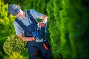 Obrezovanje dreves in žive meje prepustite strokovnjakom.