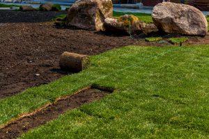 Travna ruša zelo hitro ozeleni vaš vrt.