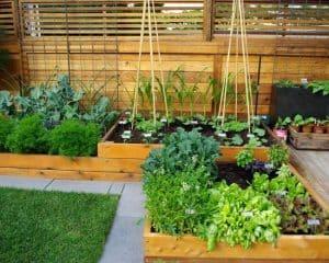 Visoke grede so zelo priljubljen način pridelave zelenjave.