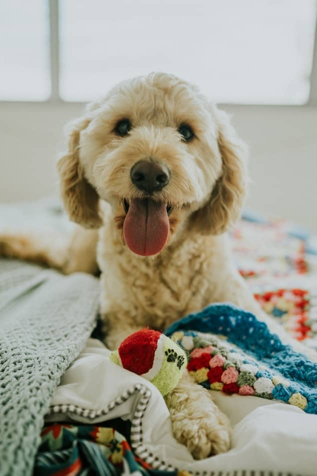pasji-hotel-zadovoljen-kuza
