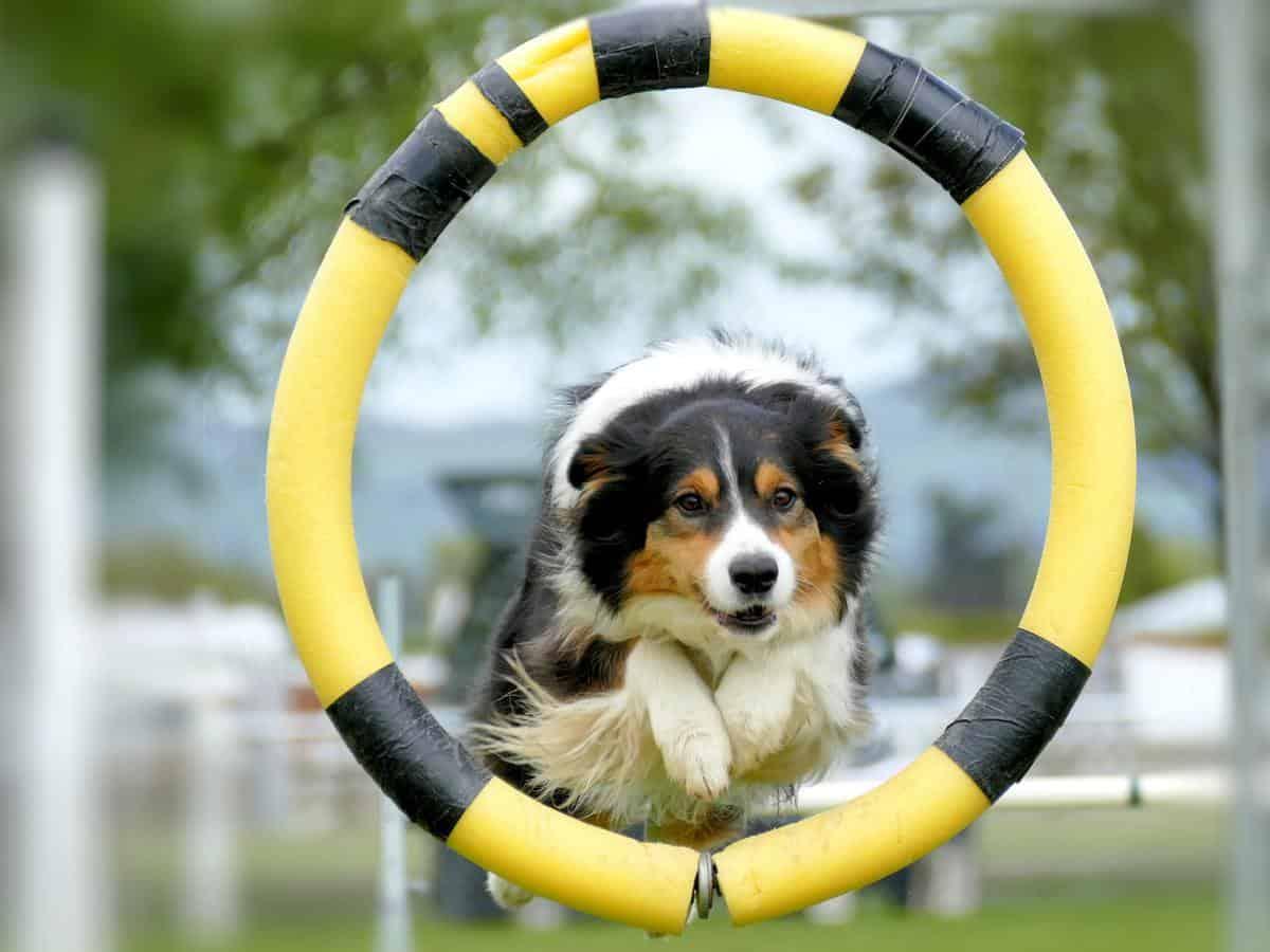 agility tečaj za psa