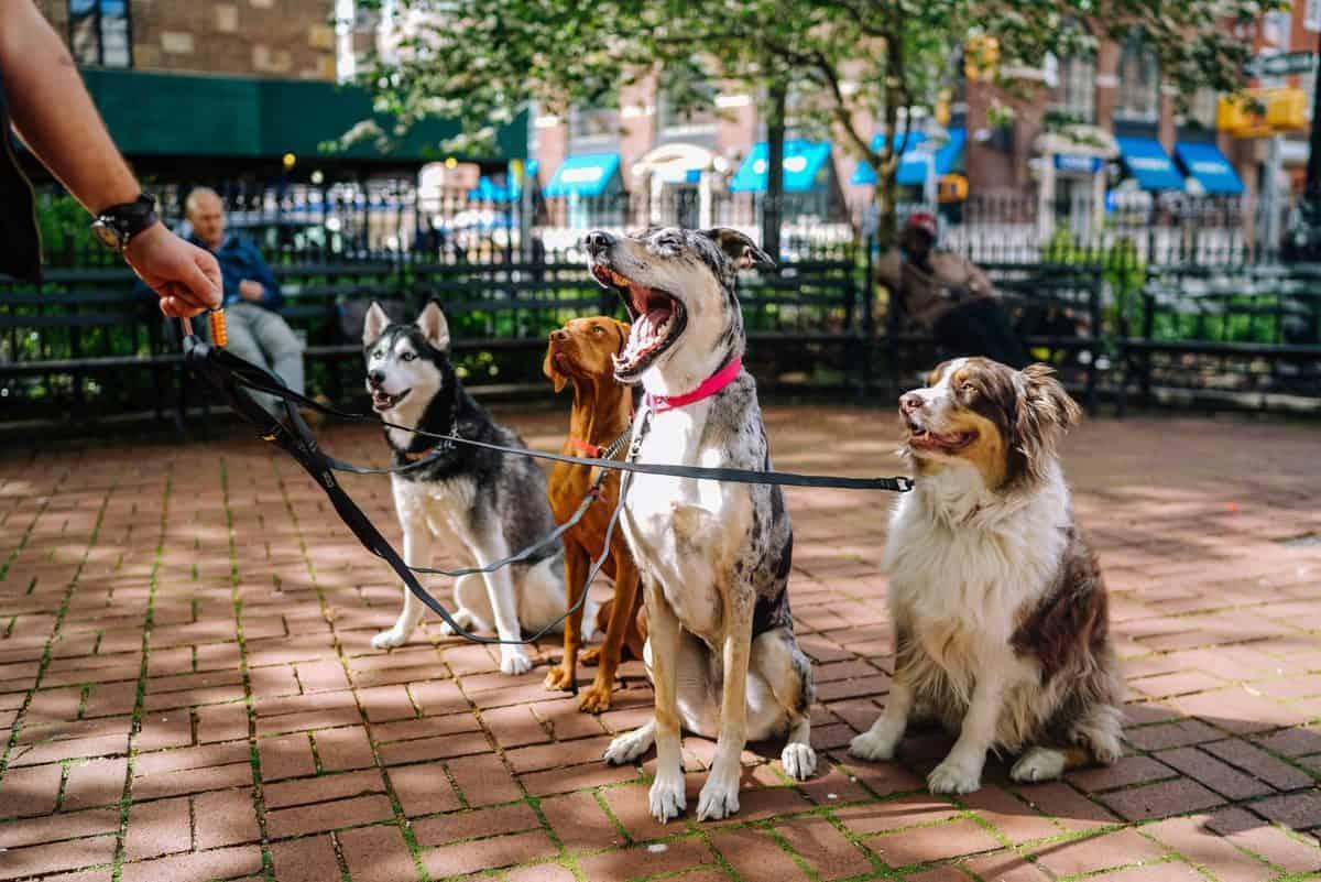 sprehajanje psov cenik