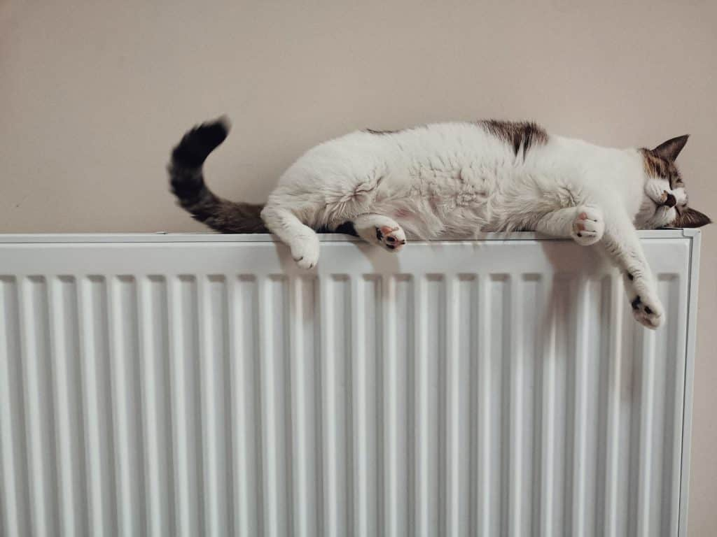 Ogrevanje z radiatorji, mačka na radioatorju