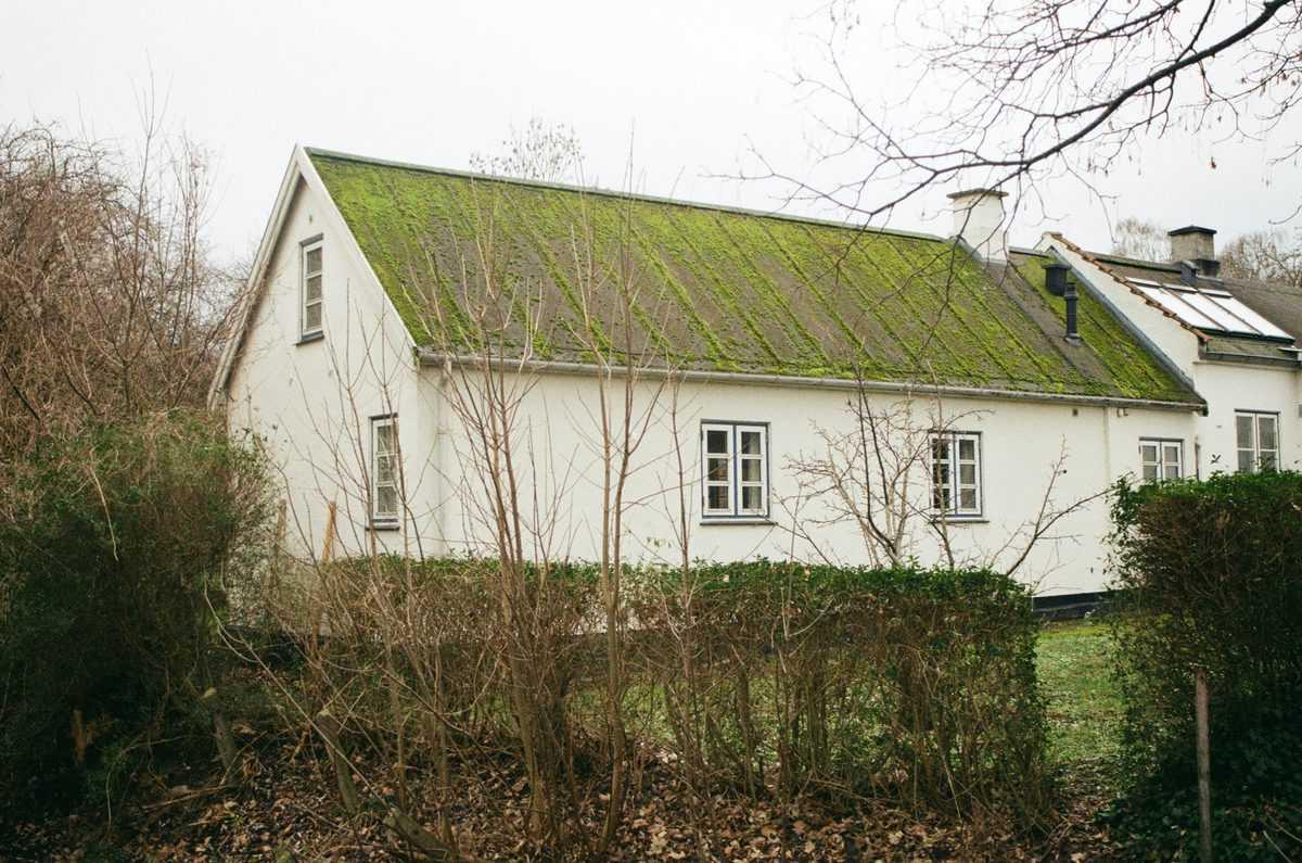 zelena-streha-prednosti-cena