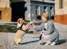 vzgoja psa pasja šola