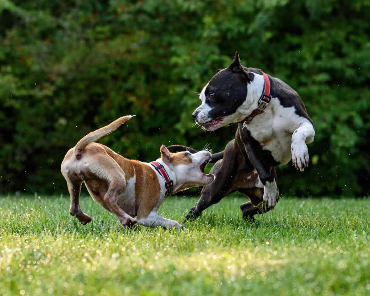 pasja šola igranje