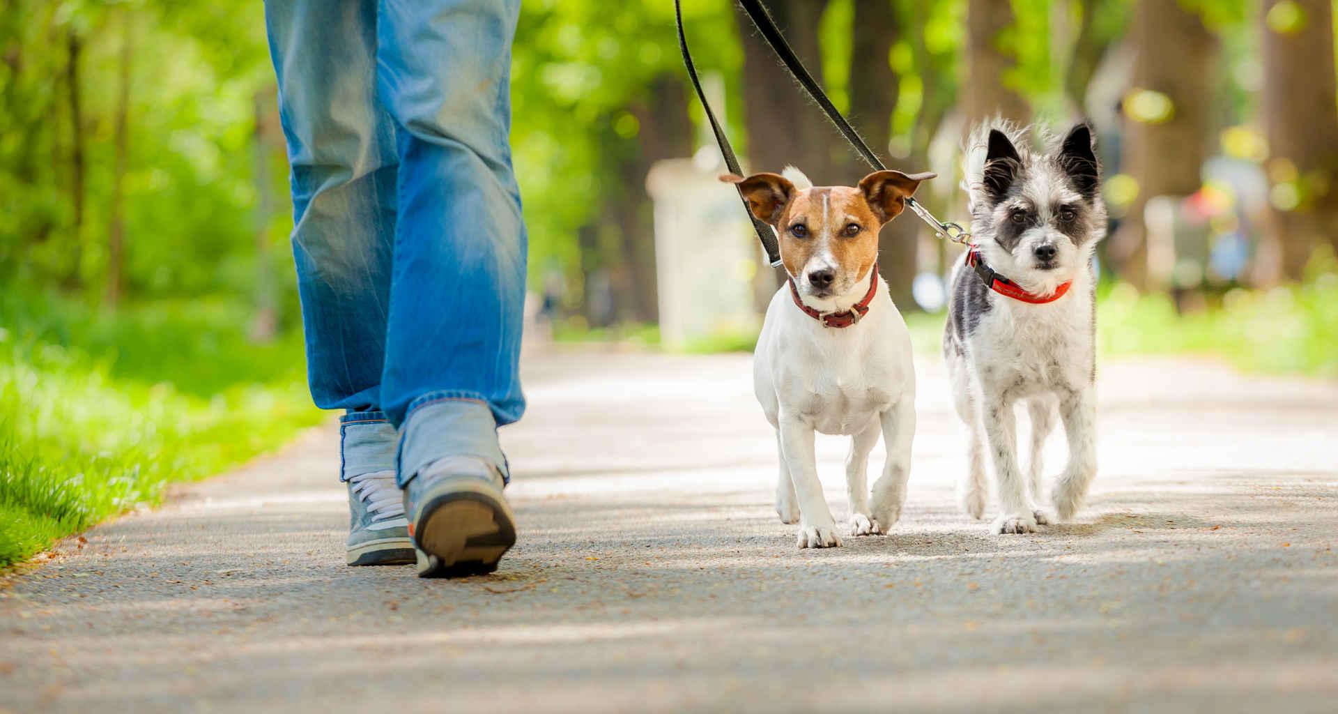 Iščete sprehajalca psov? Pomagali vam bomo najti pravega sprehajalca za vašega psa